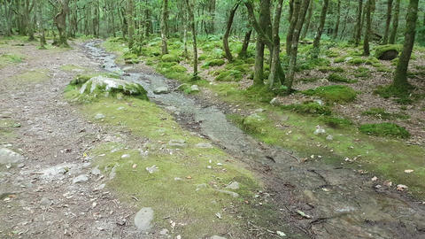 Woodland Path With Trickling Stream Footage