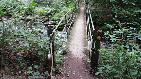 Woodland Path Crossing a Bridge Over Fast Running Stream Live Action