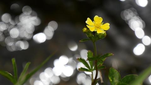 Waterside flowers ライブ動画