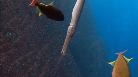 Fascinating dives off the island of ROCA Partida in the Pacific ocean near Mexic Footage