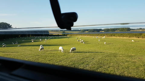 Looking out of open campervan window to field full of sheep Footage