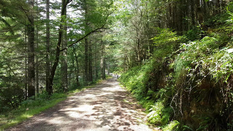 Woodland path on a summer day with cyclists Footage