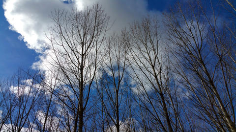 A nature of winter trees without leaves after autumn season Photo