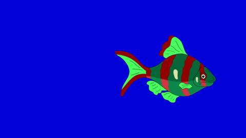 Red-green Aquarium Fish Chroma Key looped Animation