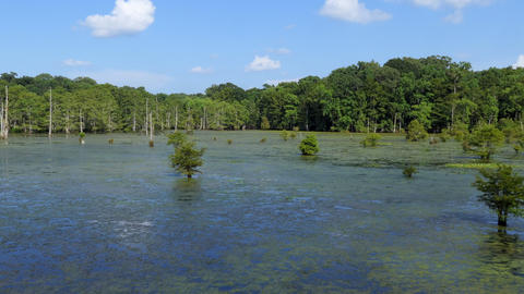Louisiana Natural Landscape With Forest At Chicot State Park Footage