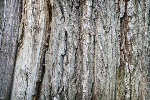 Background image: the texture of tree bark Photo