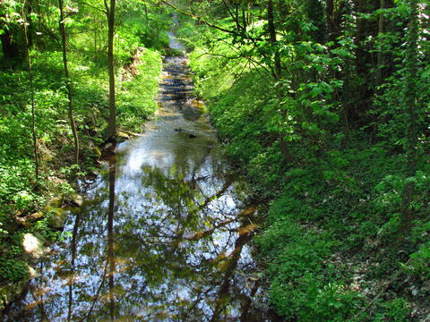 Small mountain stream in the forest, illuminated by the afternoon sun Photo
