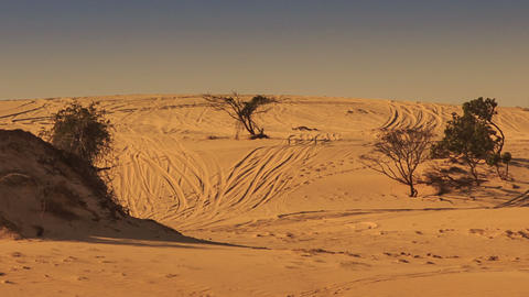 White Sand Dune Hills with Tracks Rare Plants GIF