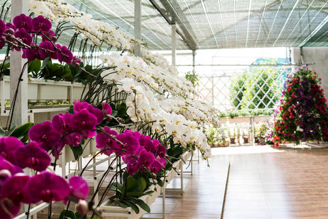greenhouse with orchids. White and multi-color orchids close-up Photo