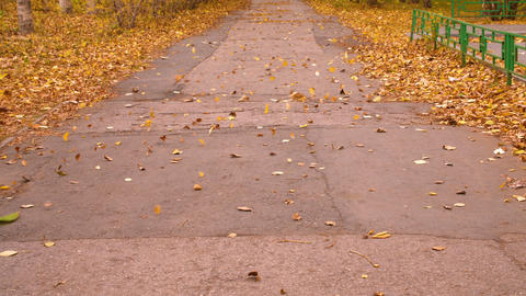 Wind blowing autumn leaves on path in city park slow motion. Autumn leaves fall Footage