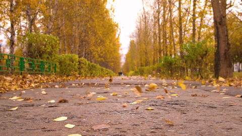 Autumn city park and falling leaves blowing wing on path. Seasonal leaves fall Live Action