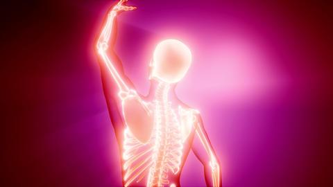 human skeleton radiography medical scan 영상물