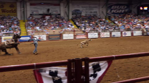 Calf Roping Or Tie-down Roping At Rodeo Show In Texas GIF