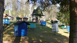 Bee garden. Beekeeping Live Action
