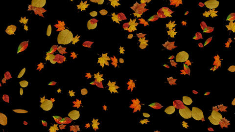 Falling autumn leaves backgrounds Animation