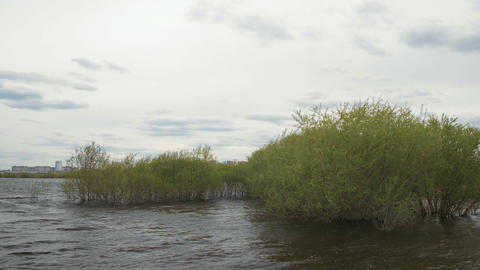 Flowing river water and green bushes on cloudy sky and city background Footage