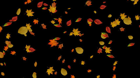 Falling autumn leaves backgrounds CG動画