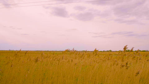 Panoramic view yellow autumn field and overcast sky with gray clouds landscape Footage