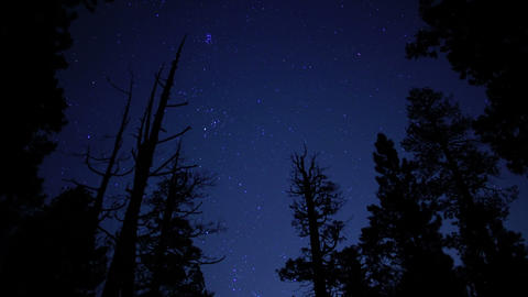 Starry Sky in Pine Forest 01 Tilt Up Footage
