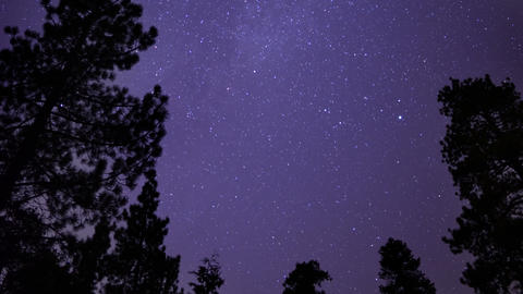 Starry Sky in Pine Forest 03 Tilt Up Milky Way Footage