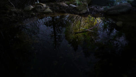 Stars Reflections 01 Creek in Forest Footage