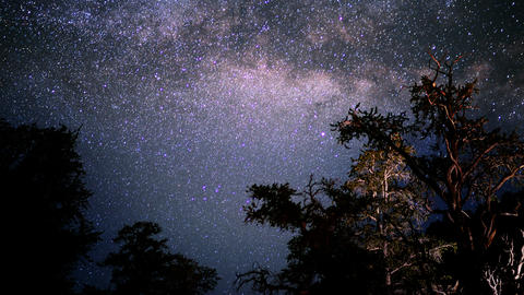 Ancient Forest Milkyway 01 Timelapse Dolly Bristlecone Pine Footage