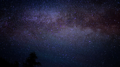 Ancient Forest Milkyway 09 Timelapse Bristlecone Pine Footage