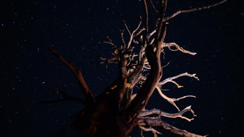 Ancient Forest Stars 01 Timelapse 3 Axis Dolly Pan Bristlecone Pine Footage