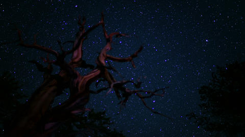 Ancient Forest Stars 07 Timelapse Dolly Bristlecone Pine Footage