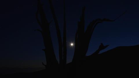 Perseid Meteor Shower Bristlecone Pine 05 Tilt Up Milky Way Time Lapse Footage