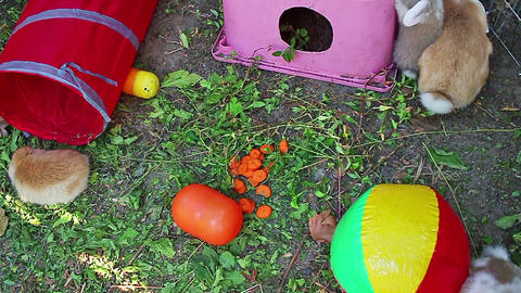 Rabbit playground in garden. Rabbits playing Footage
