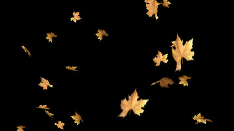 Autumn Leaves Falling With Alpha Channel Loop Clip. Can use this clip for CG動画素材