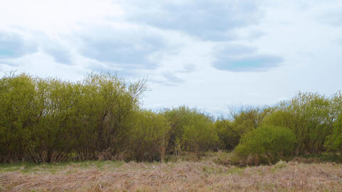 Green bushes and cloudy sky with copy space Footage