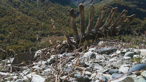Animal carcass lies on ground Footage