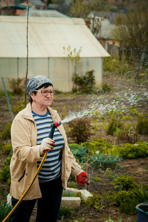 gardening and people concept - happy senior woman watering lawn by garden hose フォト