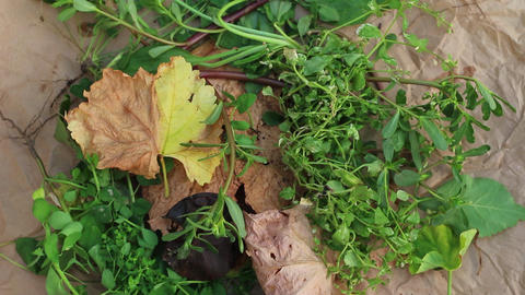 Yard Waste For Composting And General Mulching Purposes Live Action