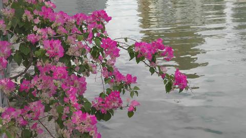川辺に咲く花 ライブ動画