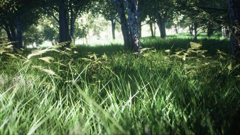 Green Park, Sun Forest Tree Landscape. 3D Rendering Fotografía