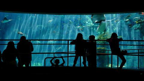 Aquarium Silhouettes 02 Family Crowds Footage