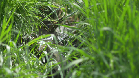 Tiny Water Stream Through Grass Footage