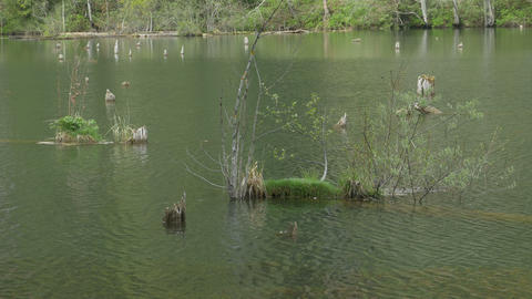 Vegetation in Lake Water Footage