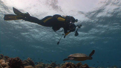Underwater photographer shooting a Hawksbill turtle. Diving on the reefs of the Live Action