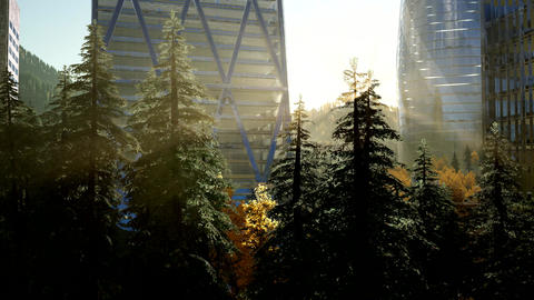park forest and skyscrapes at sunset ビデオ