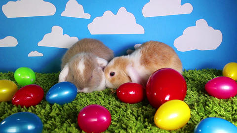 Easter bunny cute rabbit with eggs. Egg rabbits colorful background Live Action