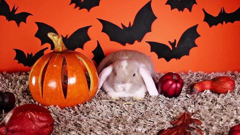 Halloween animals. Rabbit bunny DIY bat background Footage