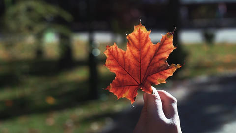 Children's hand holds the autumn leaf ビデオ