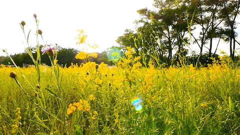 A field with flowers. Slow motion. Camera in motion Archivo