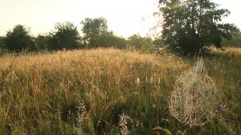 Summer landscape with field of grass and cobwebs in sun light at dawn Footage