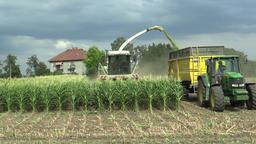 OLOMOUC, CZECH REPUBLIC, AUGUST 14, 2018: Harvesting corn field on silage as a Footage