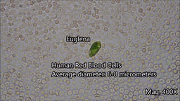 Microorganism Size Under the Microscope5 Footage